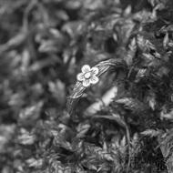 Motaný snubní nerezový a stříbrný prsten - Gordik Flower